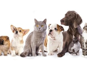 cats_dogs