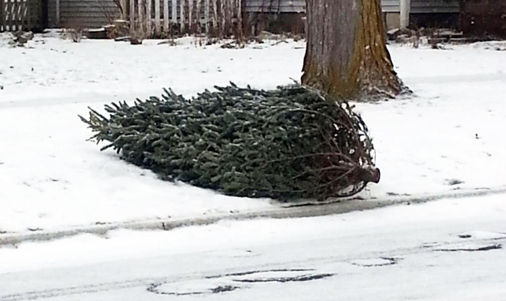 Christmas Tree Pick Up.Register For Christmas Tree Pickup The Oshawa Express