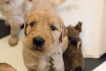 puppies_small2-2