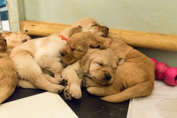 puppies_small3-2
