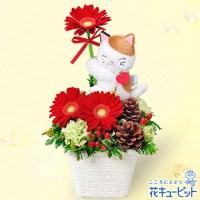 三毛猫のマスコット付きアレンジメント【3,500円+税】511903