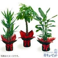 観葉植物(おまかせ)【10,000円+税】