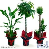 観葉植物(おまかせ)【16,200円】