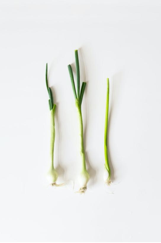수경재배를 할 때는 대파 줄기가 굵은 것을 선택하는 것이 좋고 끝 부분 10cm 남기고 잘라 활용하면 됩니다.