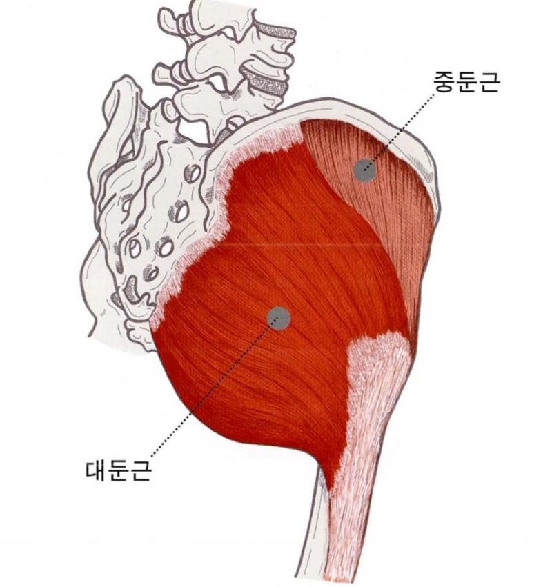 엉덩이 근육의 대표적인 두가지