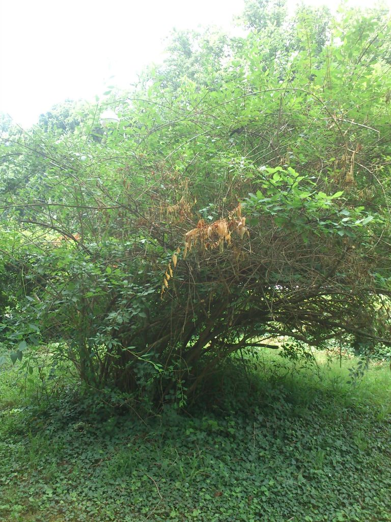 botanicarska_sekcija_201506295834