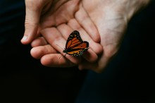 Photo of butterfly in hands