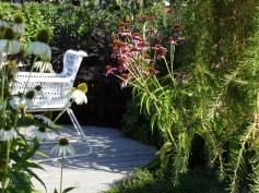 Purpursolhatt Echinacea purpurea 'Magnus' og 'White Swan'