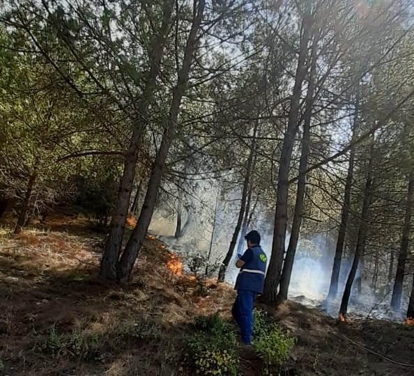 Düziçi'nde çıkan orman yangını büyümeden söndürüldü