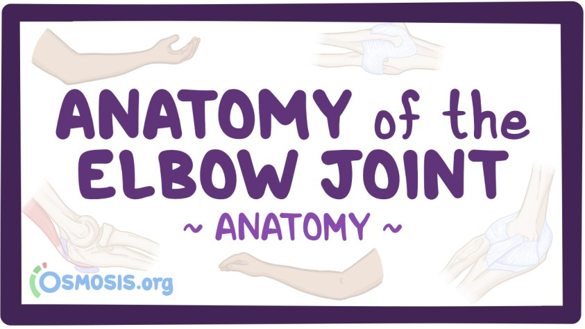 Anatomy of the elbow joint - Osmosis