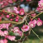 花粉症とひな祭りと卒業式で春を感じる