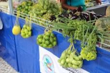 feira-agricultura-familiar-txf (40)