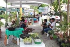 feira-agricultura-saude-ame-o-verde (20)