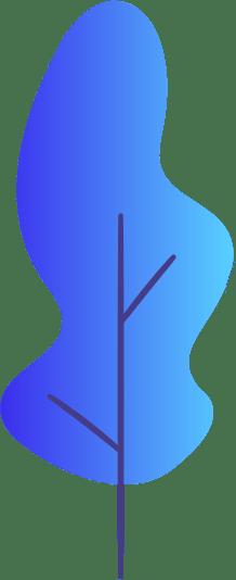 shape 6 2