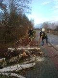 akcja usuwania drzew (4)