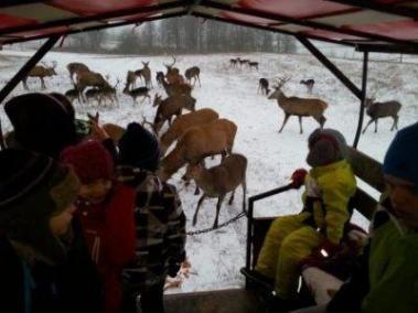 zima-2015_oboz_terapeutyczny_lq_safari_400_300_95