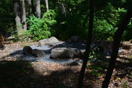 Outdoor classroom in the Founders Forrest