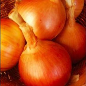 'Dakota Tears' Onion. Photo: Prairie Road Organic Seed