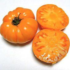 'Loxton Lass' Dwarf Tomato. Photo: Patrina Nuske Small
