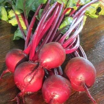 'Sweet Dakota Bliss' Beet. Photo: Prairie Road Organic Seeds
