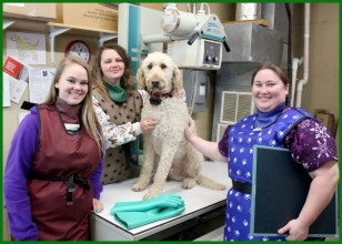 osseo veterinary clinic in osseo wisconsin