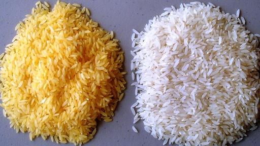 Riso OGM: il Golden Rice potrebbe salvare l'Asia?