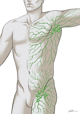 Improving Everyday Lymphatic System Detoxification