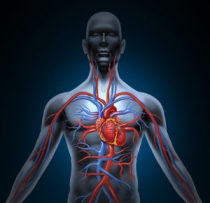 Human Heart Circulation Heart DIsease, Heart Failure
