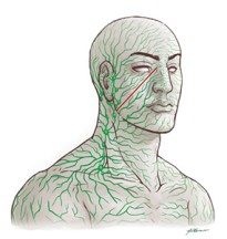 Lymphatic Vessels in Head and