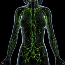 Green Lymphatic System Lady New