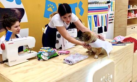 Open Summer Pets: Un panorama único para mascotas y sus dueños