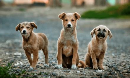 """""""Croquetón"""" cierra campaña y logra importante adhesión a favor de perros y gatos"""