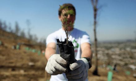COCA-COLA: REFORESTACIÓN PARA UN MEJOR PLANETA