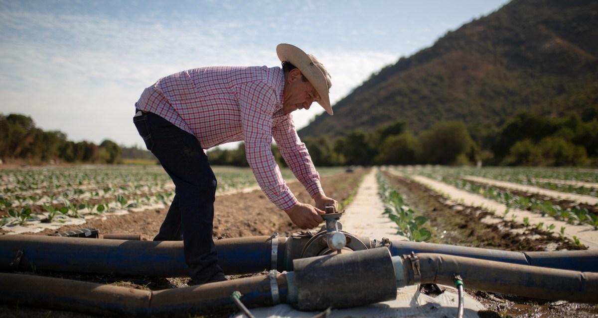 Desafíos para Chile en el Día Mundial de la Alimentación 2021
