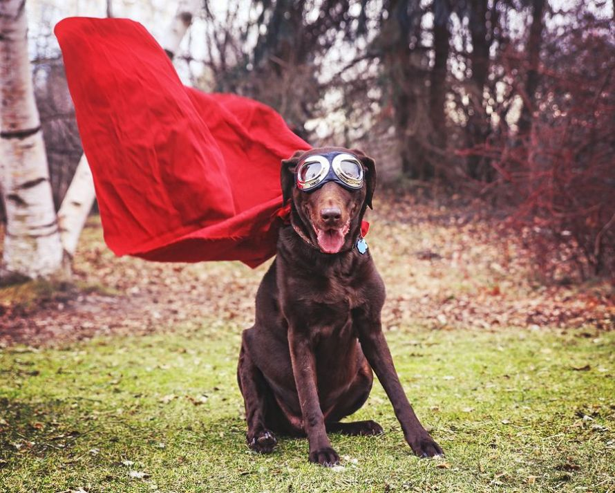 from-a-dog-to-a-super-dog