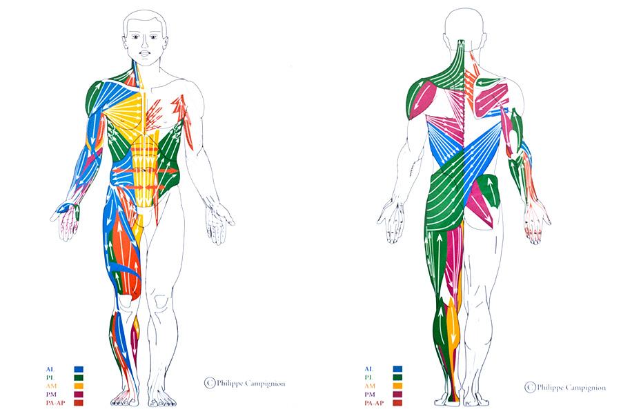 Cadenas musculares II: ¿RPG o SGA? Autoejercicios para