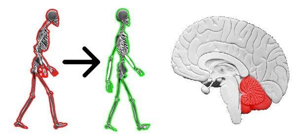 simonetta alibrandi osteopata posturologo roma postura