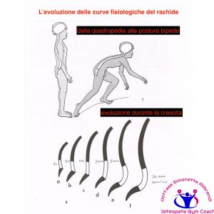 simonetta alibrandi osteopata roma posturologo postura corretta mal di schiena lombalgia ernia del disco protrusioni