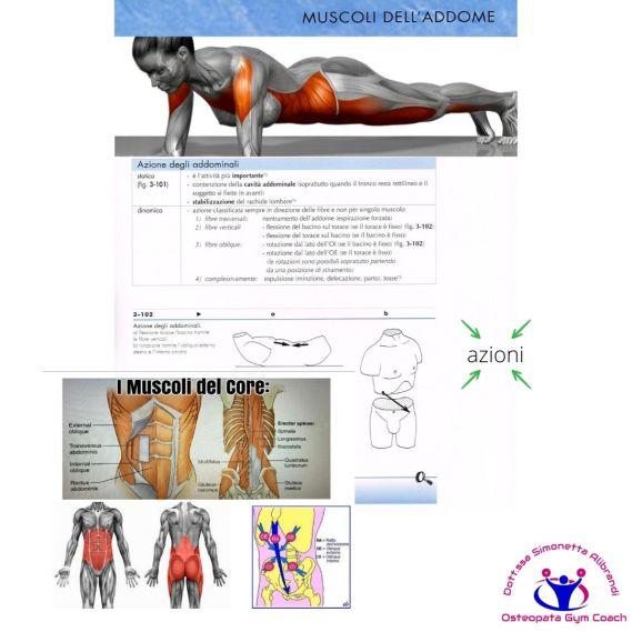 simonetta alibrandi osteopata posturologo roma mal di schiena ernia protrusione postura corretta colonna vertebrale lombosciatalgie I muscoli addominali esercizi per il core