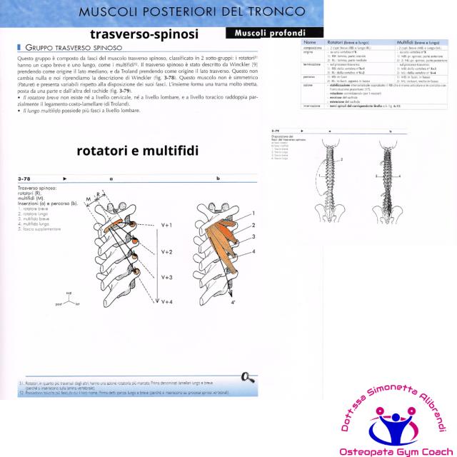 simonetta-alibrandi-osteopata-posturologo-roma-mal-di-schiena-ernia-protrusione-postura-corretta-colonna-vertebrale-lombosciatalgie-Muscoli-posteriori-trasverso-spinosi