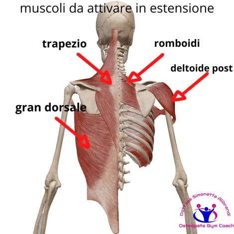 simonetta-alibrandi-osteopata-roma-posturologo-personal-trainer-dolore-alla-spalla-tendinite-lesione-al-sovraspinato-lesione-cuffia-dei-rotatori-impingment-subacromiale