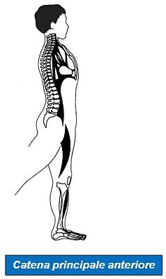 Simonetta-Alibrandi-Posturologo-Personal-trainer-postura-corretta-catene-muscolari-esercizi-posturali-stretching-globale-esercizi-mezieres-metodo
