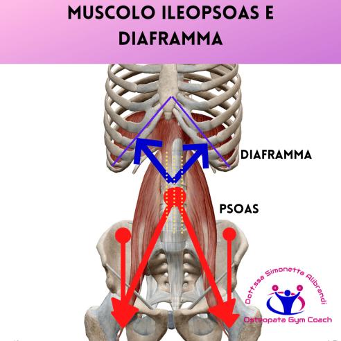 simonetta-alibrandi-osteopata-posturologo-personal-trainer-dolore-allinguine-mal-di-schiena-sintomi-rimedi-esercizi-Colon-irritabile-Muscolo-ileopsoas-e-diaframma