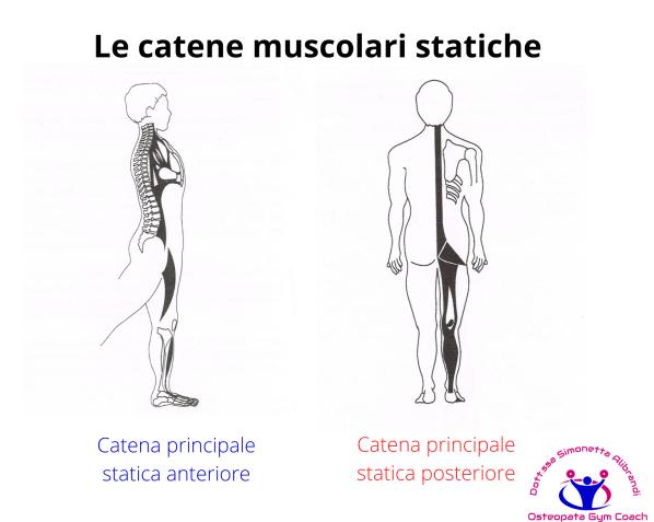 simonetta-alibrandi-osteopata-posturologo-personal-trainer-mal-di-schiena-rimedi-esercizi-Mezieres-posture-Catena-principale-statica-anteriore-posteriore