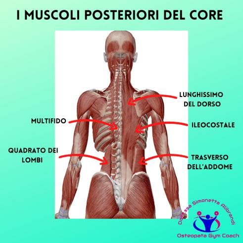 Simonetta alibrandi osteopata personal trainer posturologo lombalgia cronica mal di schiena esercizi core stability i muscoli del core _ paravertebrali- trasverso-quadrato dei lombi