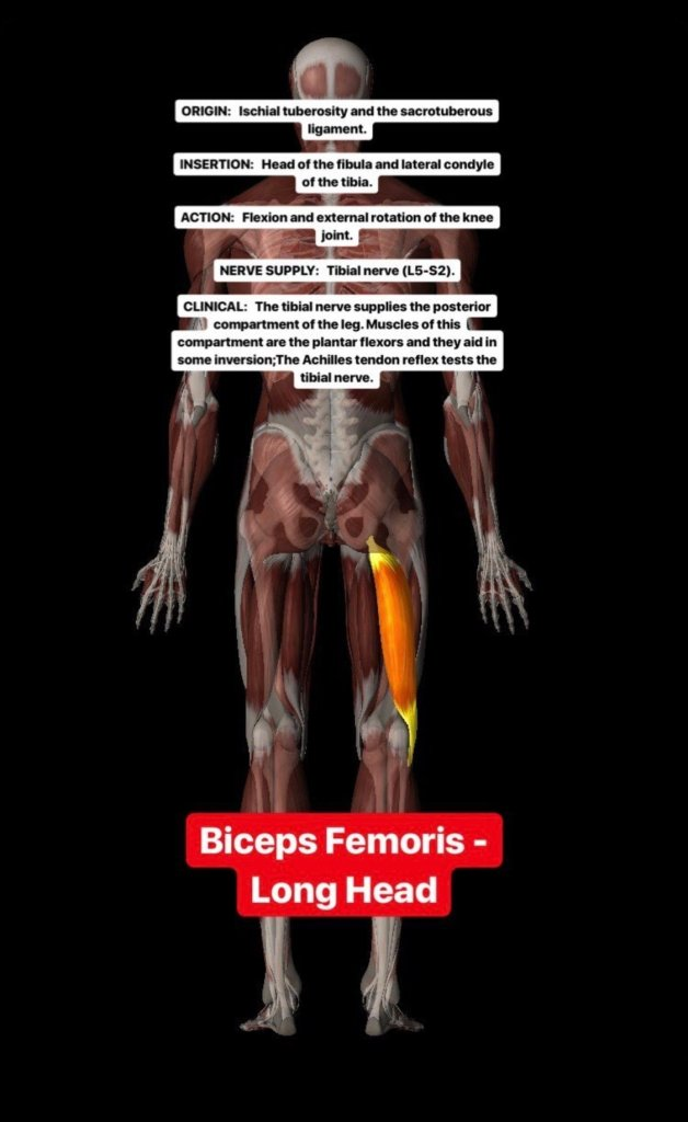 Simonetta-Alibrandi-Osteopata-personal-trainer-posturologo-mal-di-schiena-esercizi-corsa-stretching-ischiocrurali-bicipiti-femorali-Total body Postural Adjustment