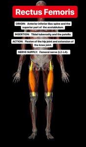 Simonetta-Alibrandi-Osteopata-personal-trainer-posturologo-mal-di-schiena-esercizi-corsa-stretching-quadricipite-squat-Total body Postural Adjustment
