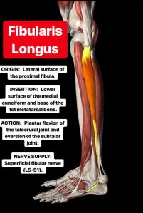 Simonetta-Alibrandi-Osteopata-personal-trainer-posturologo-mal-di-schiena-esercizi-lombalgia-stretching-corsa-peronieri-Total body Postural Adjustment