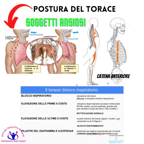 Simonetta-alibrandi-Osteopata-personal-trainer-posturologo-catene-muscolari-torace-diaframma-postura-corretta-Mezieres-esercizi-posturali-Total body Postural Adjustment