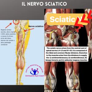 simonetta-alibrandi-osteopata-roma-personal-trainer-mezieres-nervo-sciatico-sciatalgia-esercizi-rimedi-